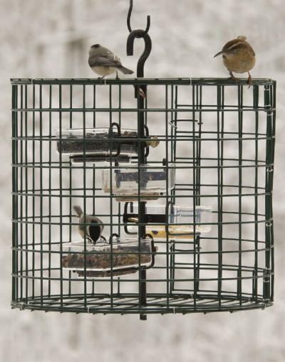 Chickadees with On-Guard Cage